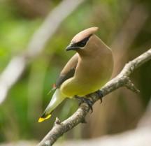 stanley park wildlife