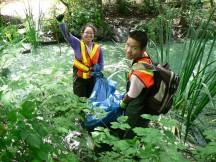 Habitat conservation Stanley Park