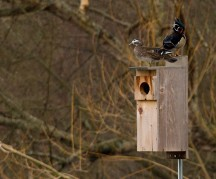 habitat restoration stanley park