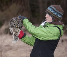 owl release Stanley Park