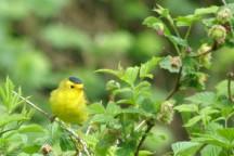 migratory birds in stanley park