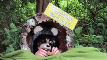 Have a conversation with this raccoon at the Eco Rangers raccoon station