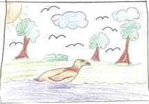 Duck by Vivian, grade 4, Vancouver