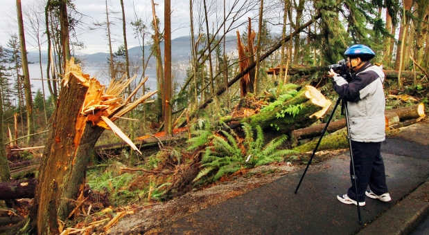 A Huge Windstorm Felled Thousands Of Trees At Vancouvers Stanley Park In December 2006 Wu Shengyuan Photographs Some The Damage Near Prospect Point