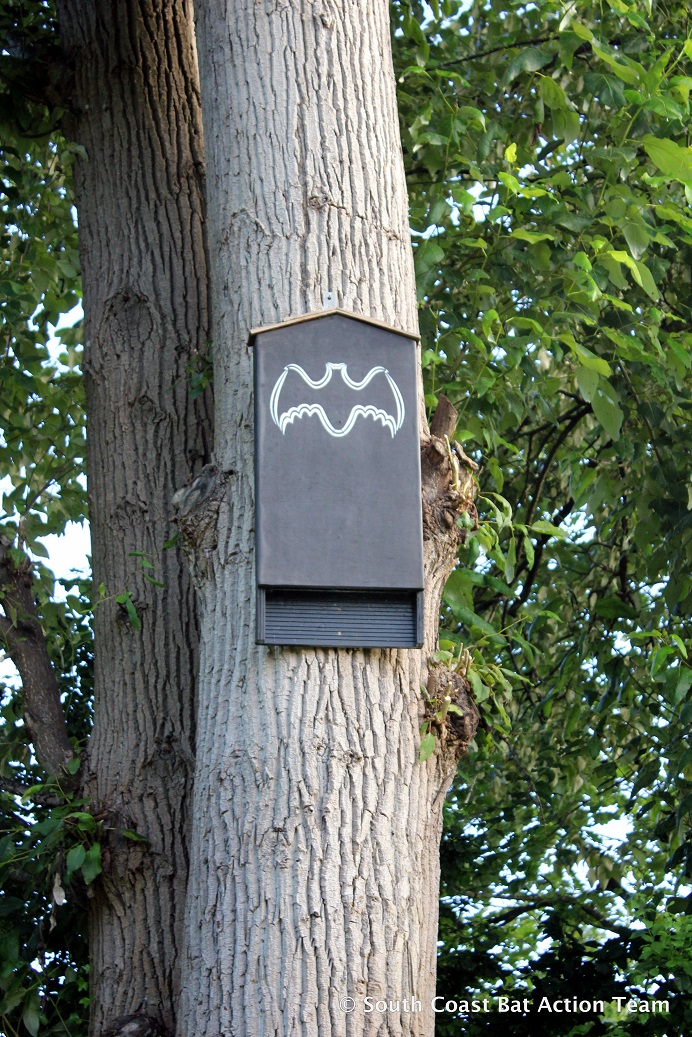 tree bat box