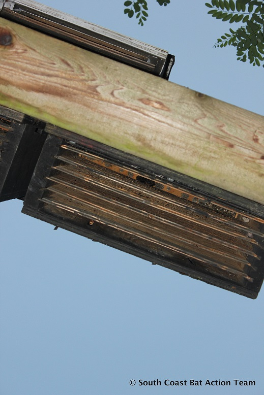 underside of bat box