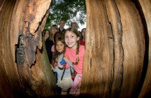 Forest Explorers Summer Day Camps for Kids