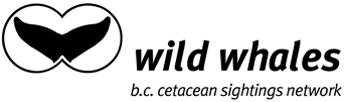 WildWhales