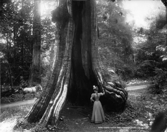 A woman examines the Hollow Tree, early 20th Century
