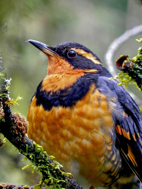 Bird Songs – Try This!