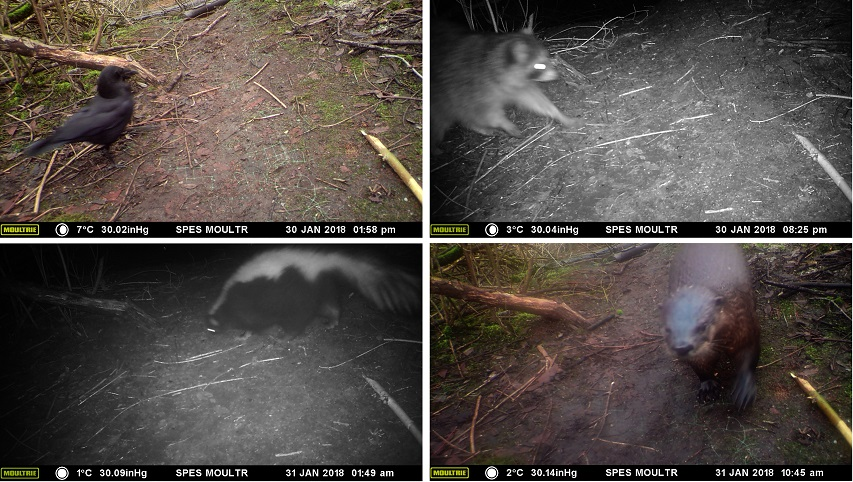 Critter cams record nightlife stanley park ecology society for Biofiltration pond